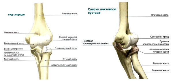 устройство локтевого сустава
